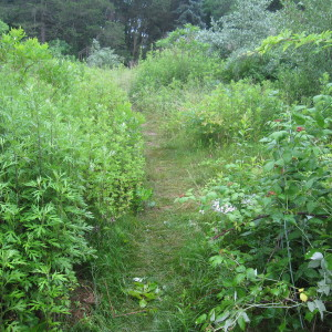 Upland Trail Without Poison Ivy and Multiflora Rose