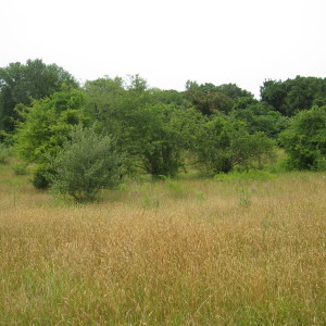 View of the Meadow