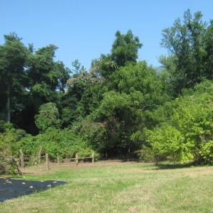 South of Lower Fence Cleared of Invasives