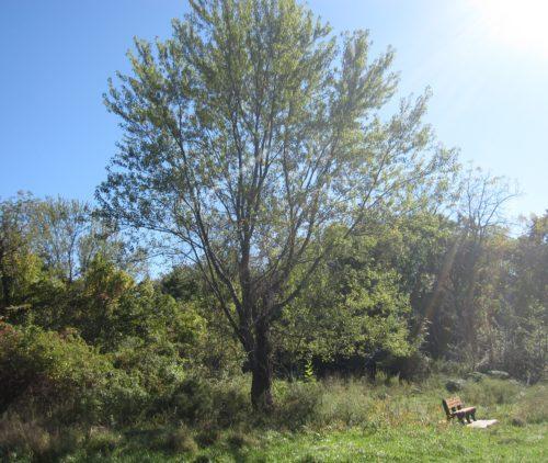 East End of Lower Meadow 10/16/17
