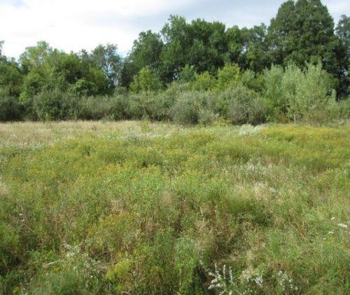 Upper Meadow 9/22/17